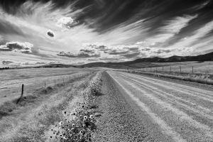 Black Butte Rd and sunflowers.jpg